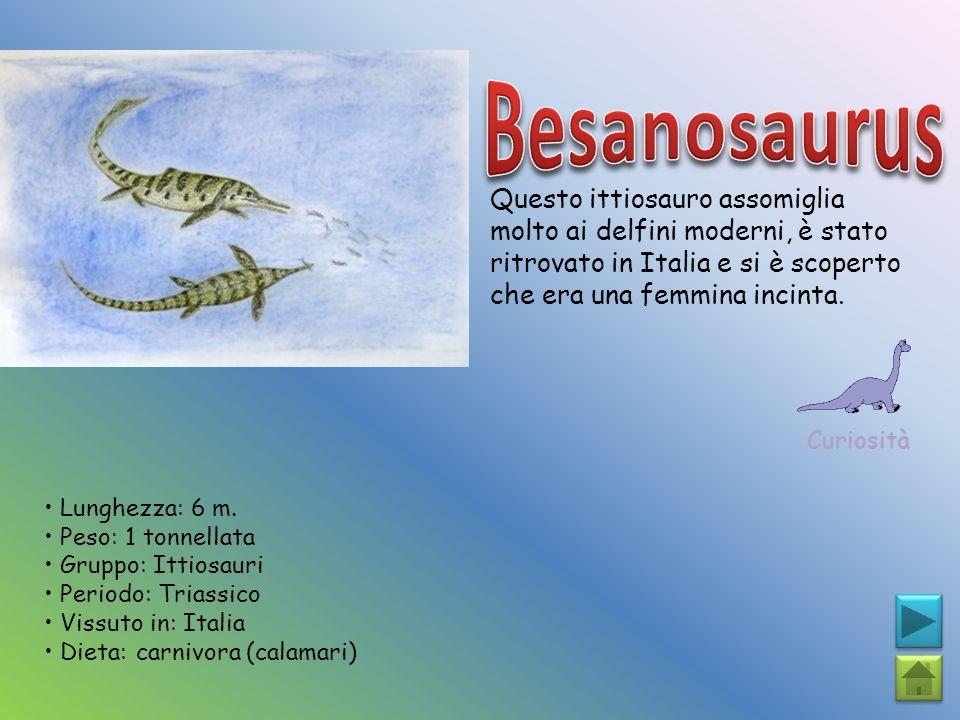 Questo ittiosauro assomiglia molto ai delfini moderni, è stato ritrovato in Italia e si è scoperto che era una femmina incinta. Curiosità Lunghezza: 6