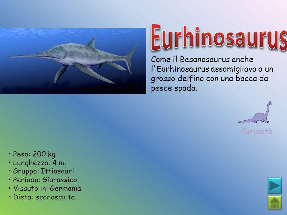 Come il Besanosaurus anche l'Eurhinosaurus assomigliava a un grosso delfino con una bocca da pesce spada. Curiosità Peso: 200 kg Lunghezza: 4 m. Grupp