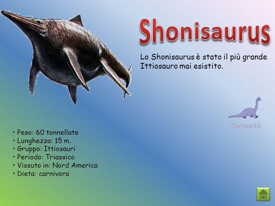 Lo Shonisaurus è stato il più grande Ittiosauro mai esistito. Curiosità Peso: 60 tonnellate Lunghezza: 15 m. Gruppo: Ittiosauri Periodo: Triassico Vis