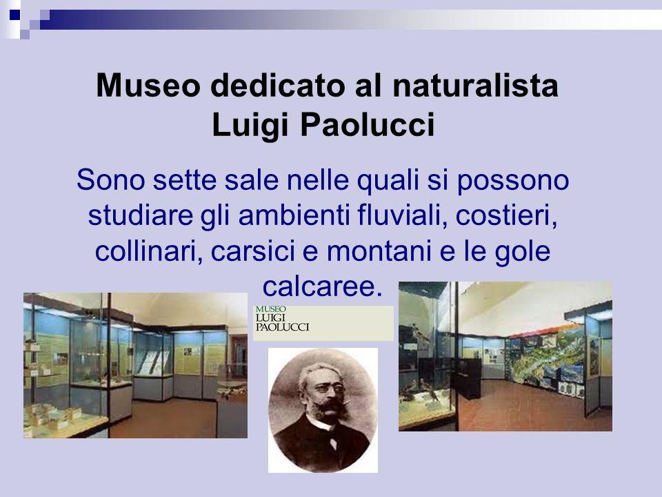 Museo dedicato al naturalista Luigi Paolucci Sono sette sale nelle quali si possono studiare gli ambienti fluviali, costieri, collinari, carsici e mon