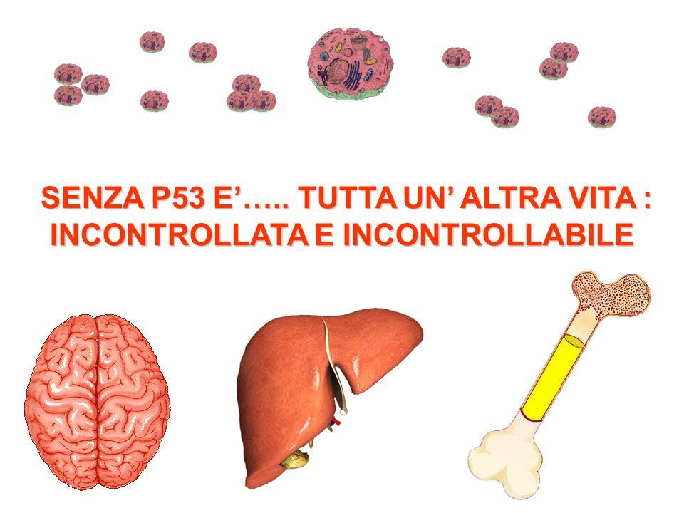 SENZA P53 E….. TUTTA UN ALTRA VITA : INCONTROLLATA E INCONTROLLABILE