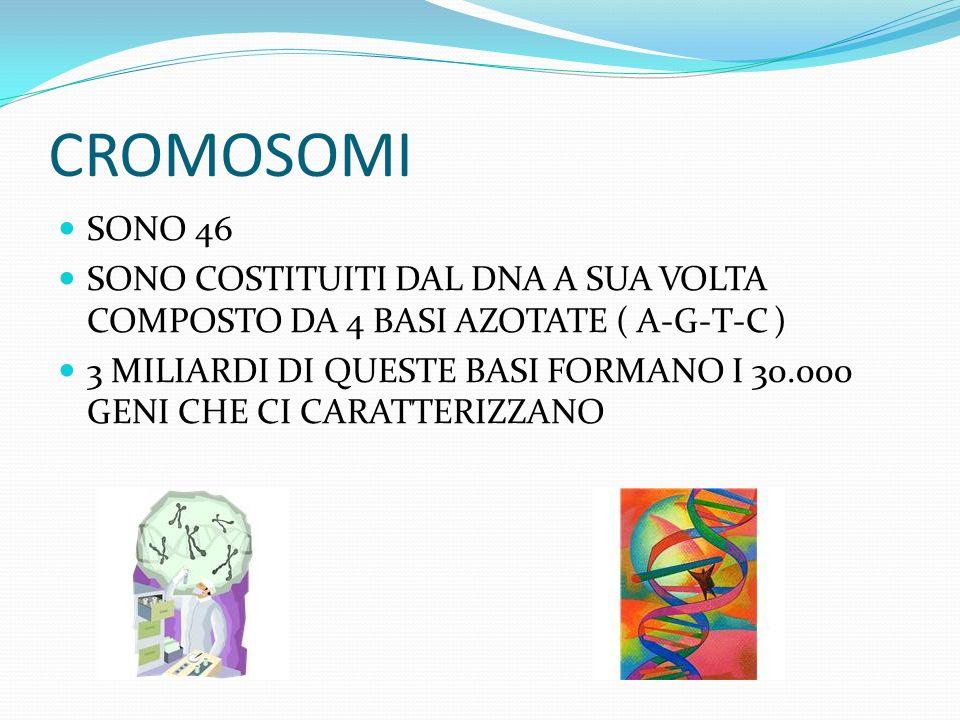 CROMOSOMI SONO 46 SONO COSTITUITI DAL DNA A SUA VOLTA COMPOSTO DA 4 BASI AZOTATE ( A-G-T-C ) 3 MILIARDI DI QUESTE BASI FORMANO I 30.000 GENI CHE CI CARATTERIZZANO