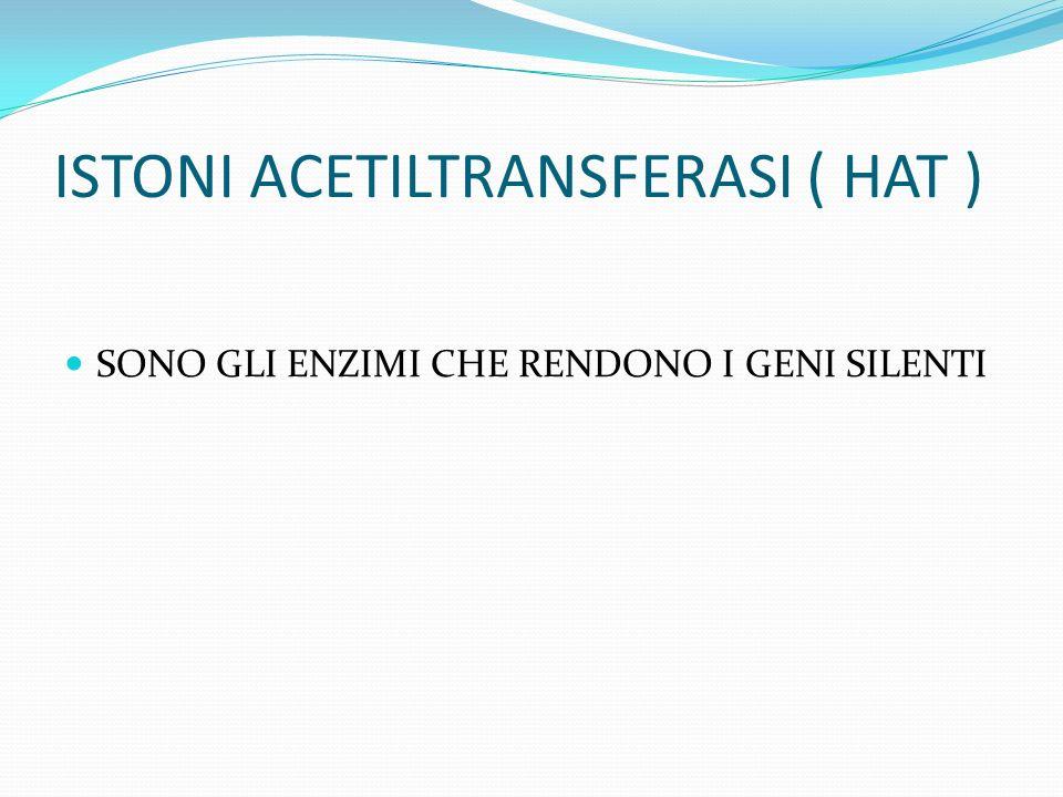 ISTONI ACETILTRANSFERASI ( HAT ) SONO GLI ENZIMI CHE RENDONO I GENI SILENTI