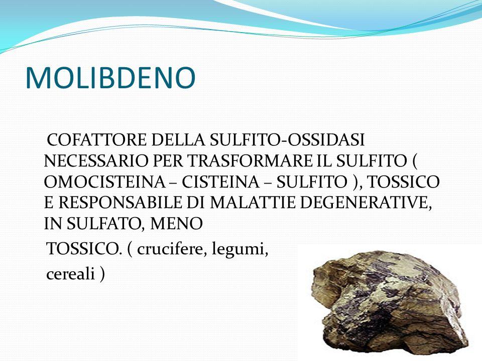MOLIBDENO COFATTORE DELLA SULFITO-OSSIDASI NECESSARIO PER TRASFORMARE IL SULFITO ( OMOCISTEINA – CISTEINA – SULFITO ), TOSSICO E RESPONSABILE DI MALATTIE DEGENERATIVE, IN SULFATO, MENO TOSSICO.