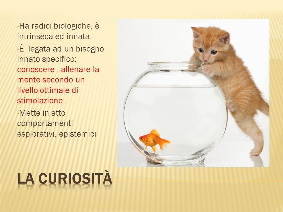 Ha radici biologiche, è intrinseca ed innata. È legata ad un bisogno innato specifico: conoscere, allenare la mente secondo un livello ottimale di sti