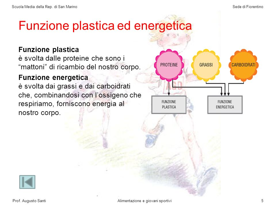 Funzione plastica ed energetica Funzione plastica è svolta dalle proteine che sono i mattoni di ricambio del nostro corpo.