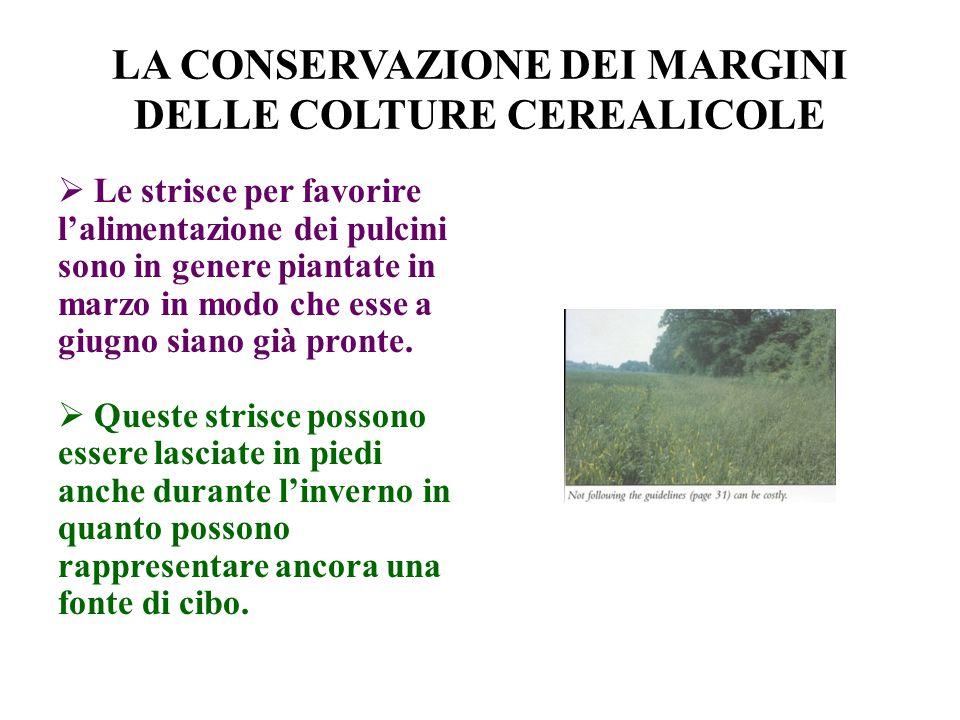 LA CONSERVAZIONE DEI MARGINI DELLE COLTURE CEREALICOLE Le strisce per favorire lalimentazione dei pulcini sono in genere piantate in marzo in modo che esse a giugno siano già pronte.
