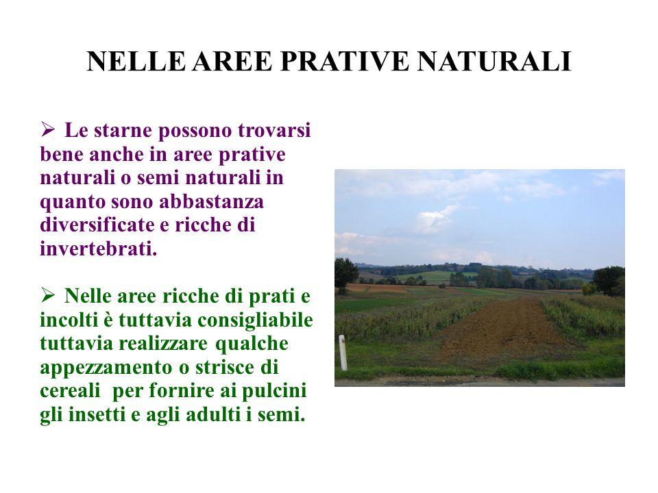 NELLE AREE PRATIVE NATURALI Le starne possono trovarsi bene anche in aree prative naturali o semi naturali in quanto sono abbastanza diversificate e ricche di invertebrati.