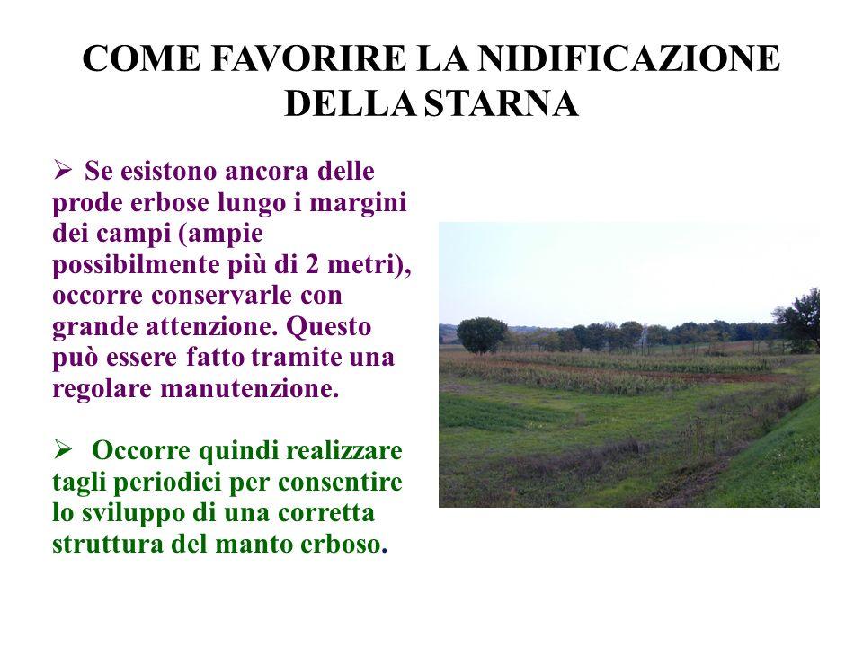 COME FAVORIRE LA NIDIFICAZIONE DELLA STARNA Se esistono ancora delle prode erbose lungo i margini dei campi (ampie possibilmente più di 2 metri), occorre conservarle con grande attenzione.