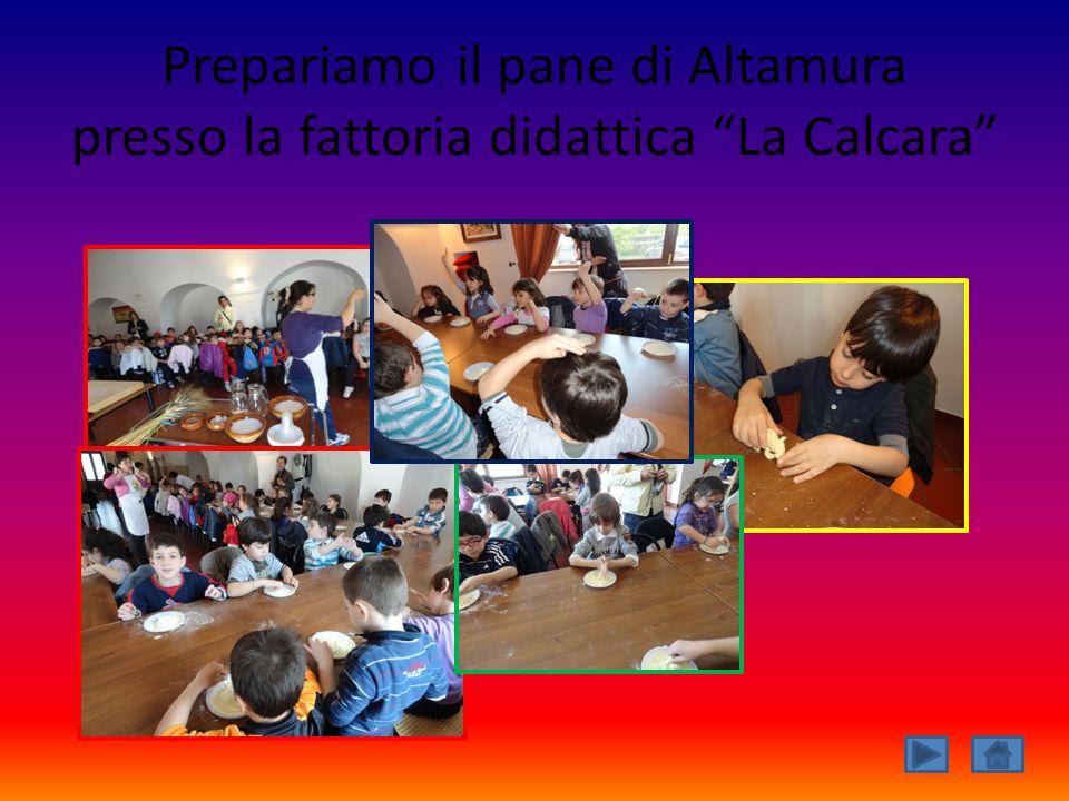 Prepariamo il pane di Altamura presso la fattoria didattica La Calcara