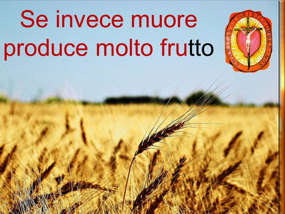Se il chicco di grano, caduto in terra, non muore, rimane solo (Gv 12,24)