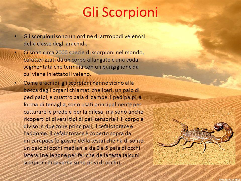 Gli Scorpioni Gli scorpioni sono un ordine di artropodi velenosi della classe degli aracnidi. Ci sono circa 2000 specie di scorpioni nel mondo, caratt