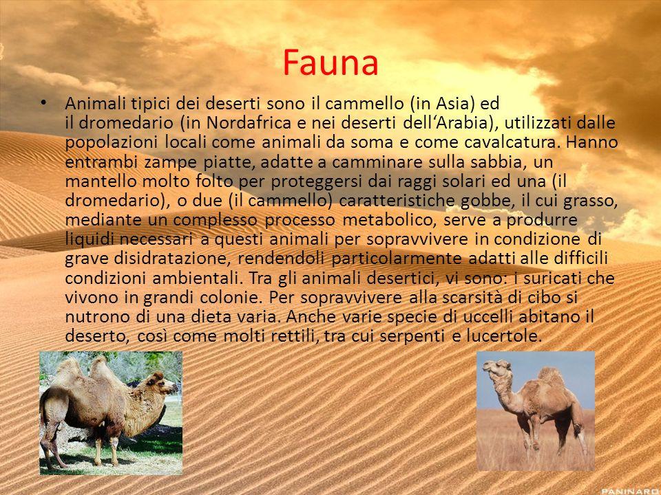 Fauna Animali tipici dei deserti sono il cammello (in Asia) ed il dromedario (in Nordafrica e nei deserti dellArabia), utilizzati dalle popolazioni lo