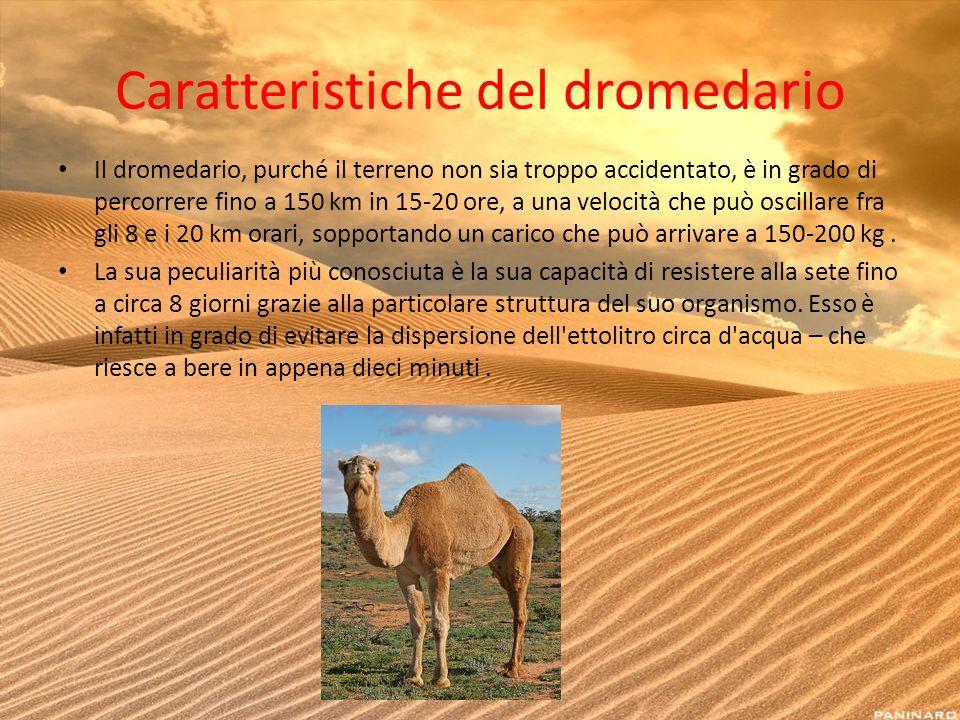 Caratteristiche del dromedario Il dromedario, purché il terreno non sia troppo accidentato, è in grado di percorrere fino a 150 km in 15-20 ore, a una