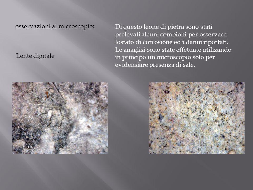osservazioni al microscopio: Lente digitale Di questo leone di pietra sono stati prelevati alcuni compioni per osservare lostato di corrosione ed i da