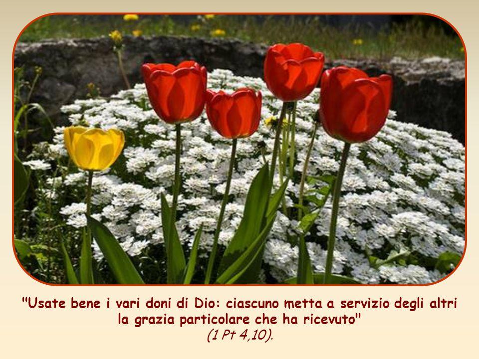 Usate bene i vari doni di Dio: ciascuno metta a servizio degli altri la grazia particolare che ha ricevuto (1 Pt 4,10).