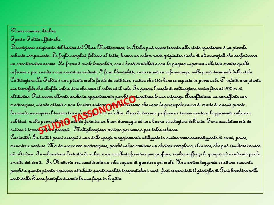 Nome comune: Salvia Specie: Salvia officinalis Descrizione: originaria del bacino del Mar Mediterraneo, in Italia può essere trovata allo stato sponta