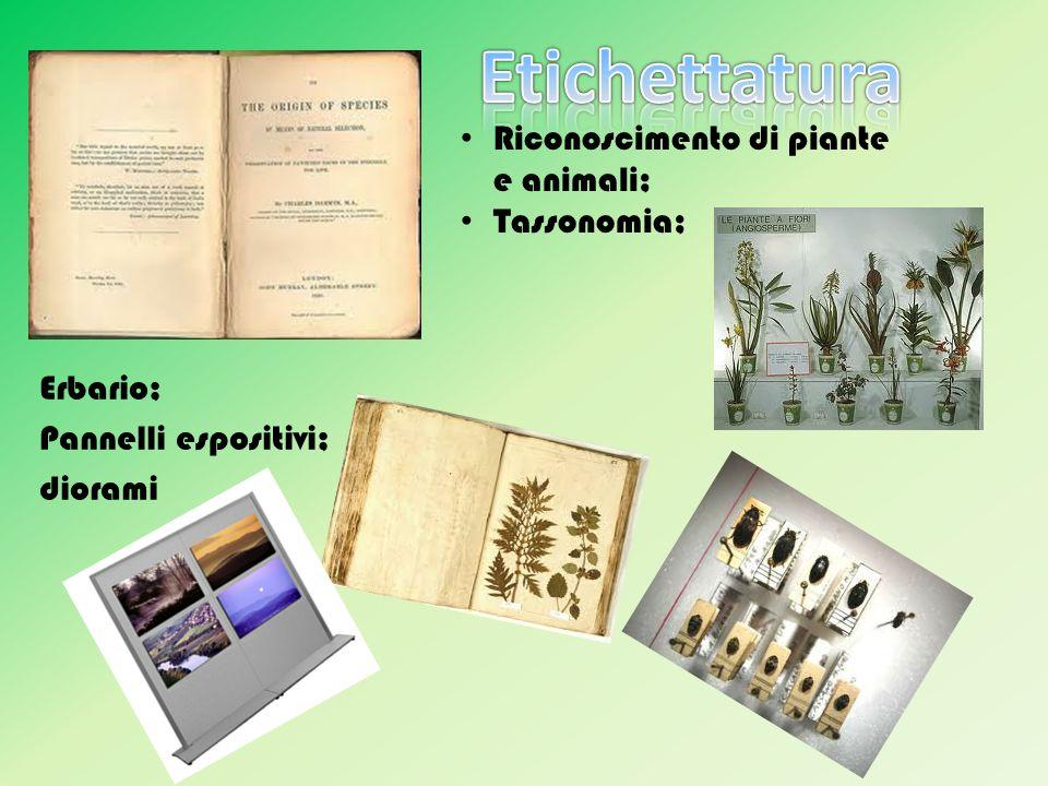 Erbario; Pannelli espositivi; diorami Riconoscimento di piante e animali; Tassonomia;