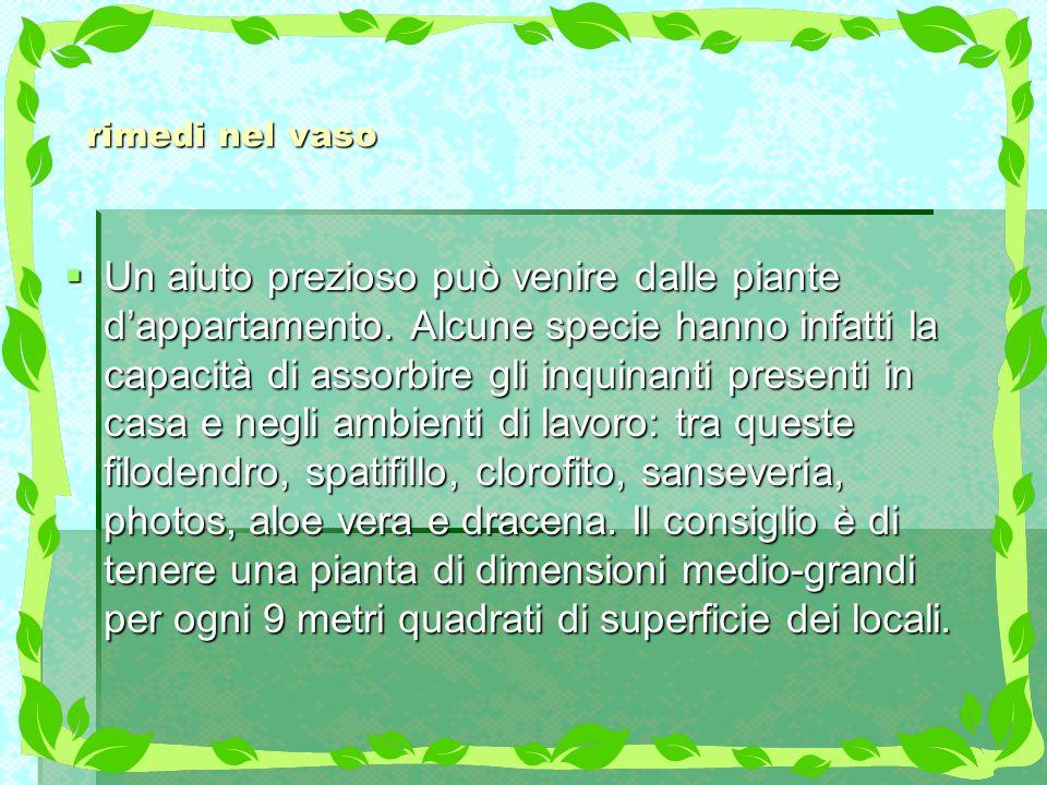 rimedi nel vaso Un aiuto prezioso può venire dalle piante dappartamento. Alcune specie hanno infatti la capacità di assorbire gli inquinanti presenti