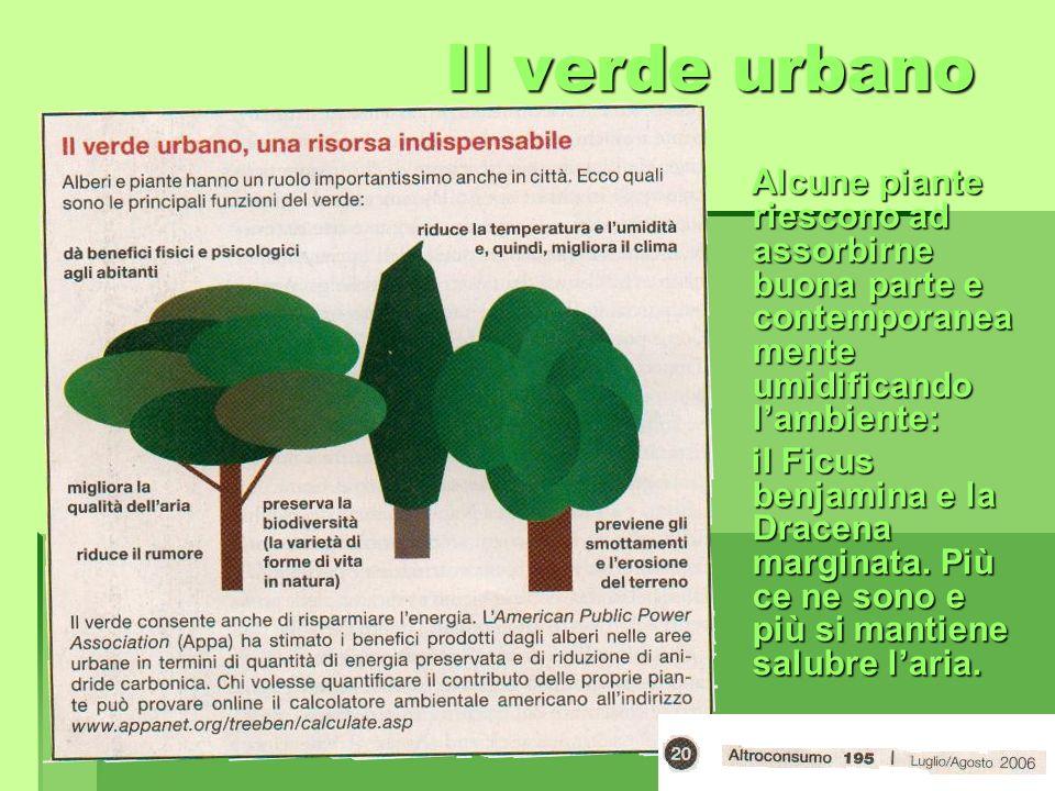 Il verde urbano Il verde urbano Alcune piante riescono ad assorbirne buona parte e contemporanea mente umidificando lambiente: Alcune piante riescono