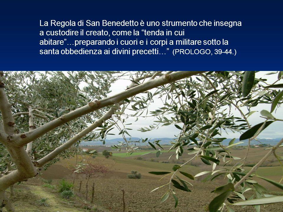 La Regola di San Benedetto è uno strumento che insegna a custodire il creato, come la tenda in cui abitare…preparando i cuori e i corpi a militare sot