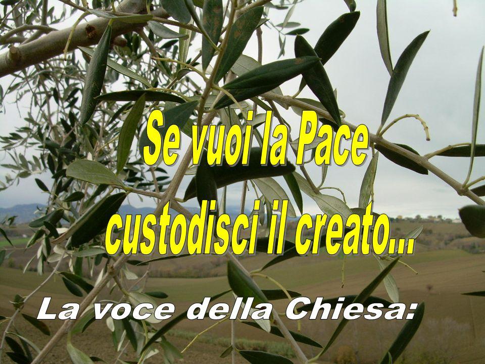 Se vuoi coltivare la pace, custodisci il creato.
