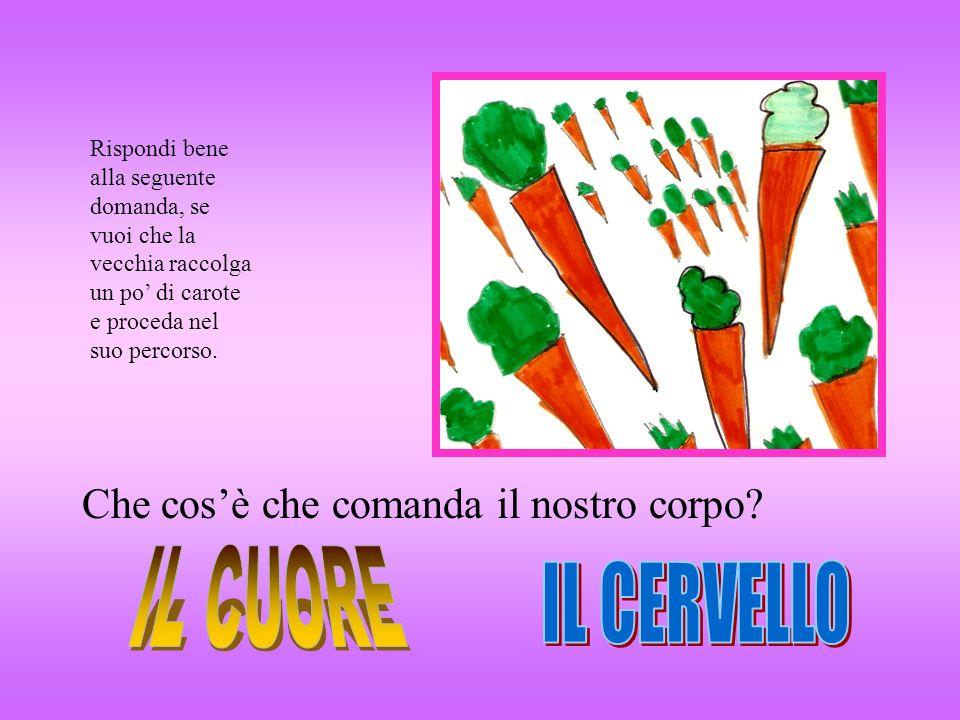 Rispondi bene alla seguente domanda, se vuoi che la vecchia raccolga un po di carote e proceda nel suo percorso. Che cosè che comanda il nostro corpo?