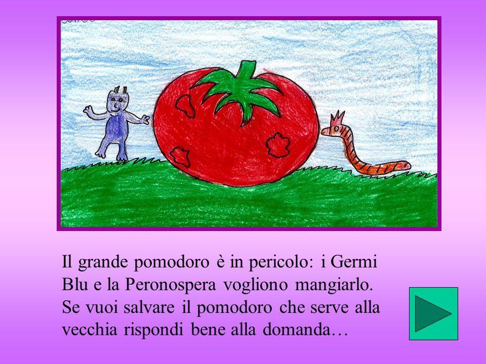 Il grande pomodoro è in pericolo: i Germi Blu e la Peronospera vogliono mangiarlo. Se vuoi salvare il pomodoro che serve alla vecchia rispondi bene al
