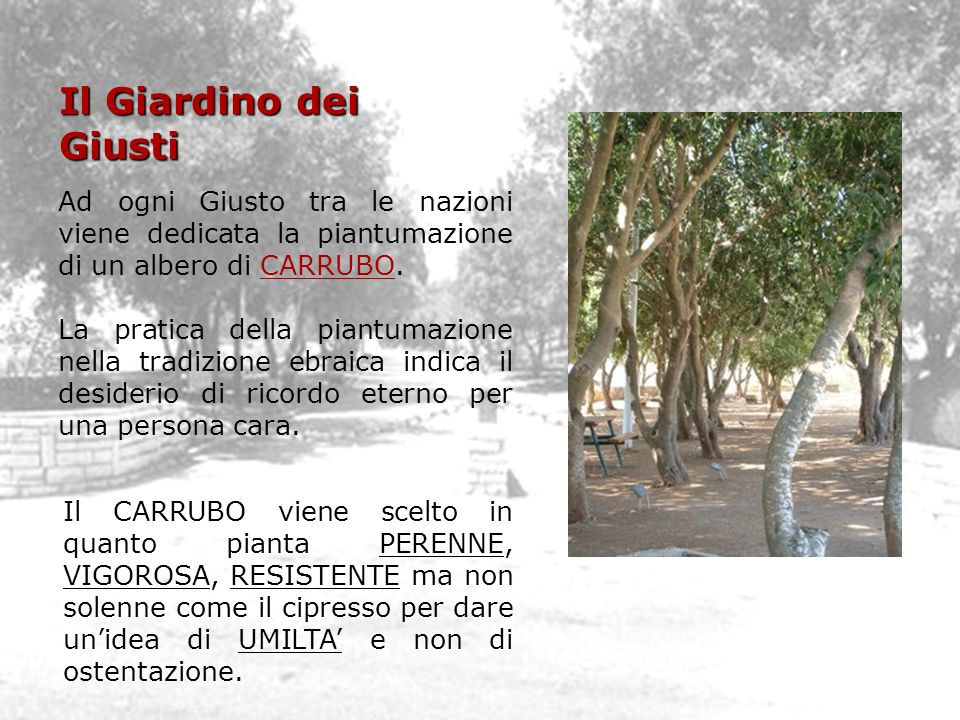 Il Giardino dei Giusti Ad ogni Giusto tra le nazioni viene dedicata la piantumazione di un albero di CARRUBO. La pratica della piantumazione nella tra