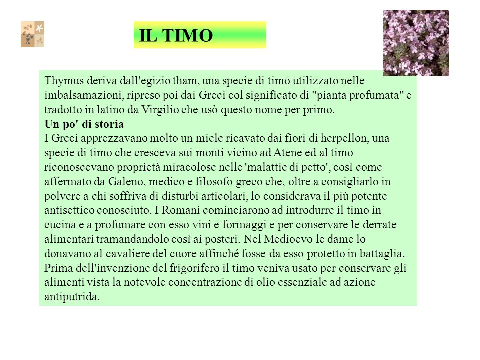 IL TIMO Thymus deriva dall egizio tham, una specie di timo utilizzato nelle imbalsamazioni, ripreso poi dai Greci col significato di pianta profumata e tradotto in latino da Virgilio che usò questo nome per primo.