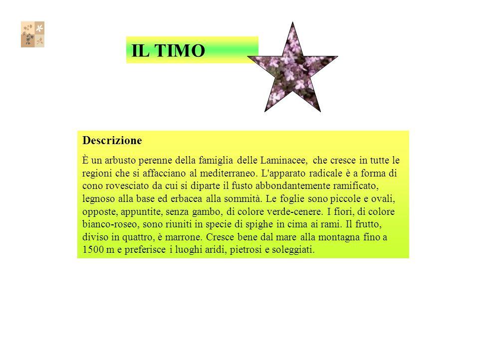 Descrizione È un arbusto perenne della famiglia delle Laminacee, che cresce in tutte le regioni che si affacciano al mediterraneo.