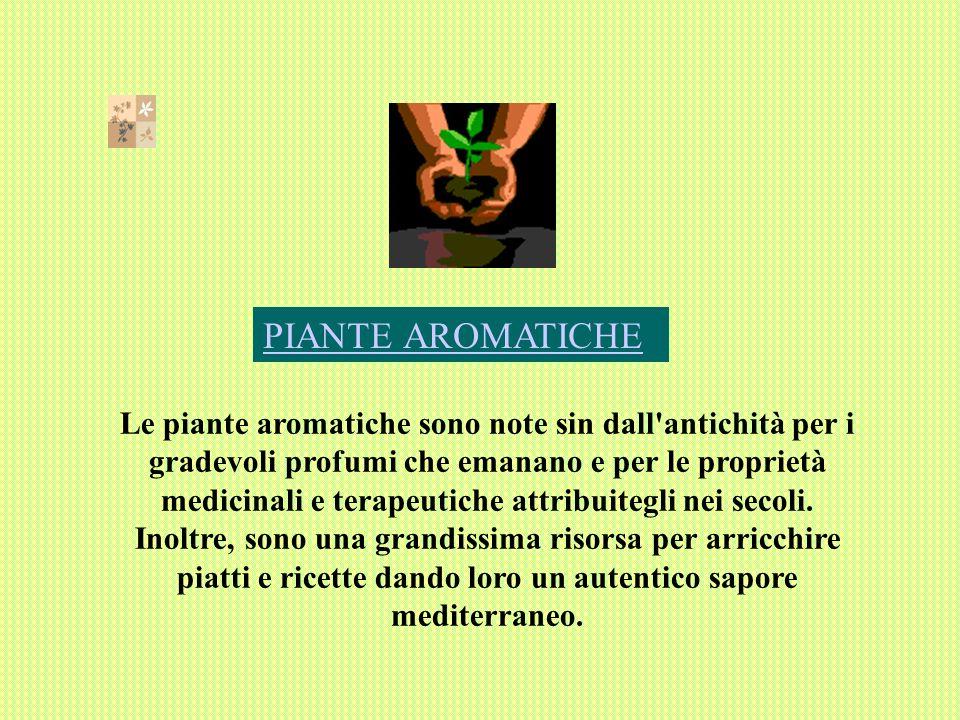 PIANTE AROMATICHE Le piante aromatiche sono note sin dall antichità per i gradevoli profumi che emanano e per le proprietà medicinali e terapeutiche attribuitegli nei secoli.
