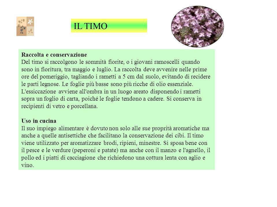 Raccolta e conservazione Del timo si raccolgono le sommità fiorite, o i giovani ramoscelli quando sono in fioritura, tra maggio e luglio.