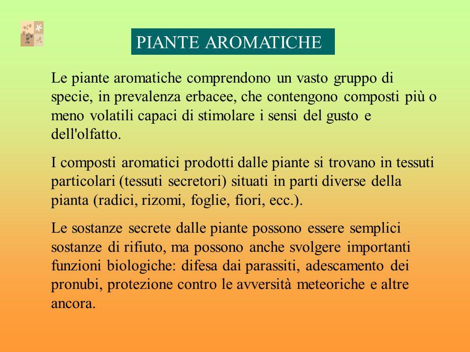 Le piante aromatiche comprendono un vasto gruppo di specie, in prevalenza erbacee, che contengono composti più o meno volatili capaci di stimolare i sensi del gusto e dell olfatto.