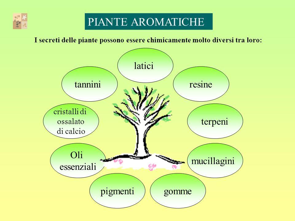 I secreti delle piante possono essere chimicamente molto diversi tra loro: mucillagini Oli essenziali resine gomme terpeni cristalli di ossalato di calcio tannini latici pigmenti PIANTE AROMATICHE