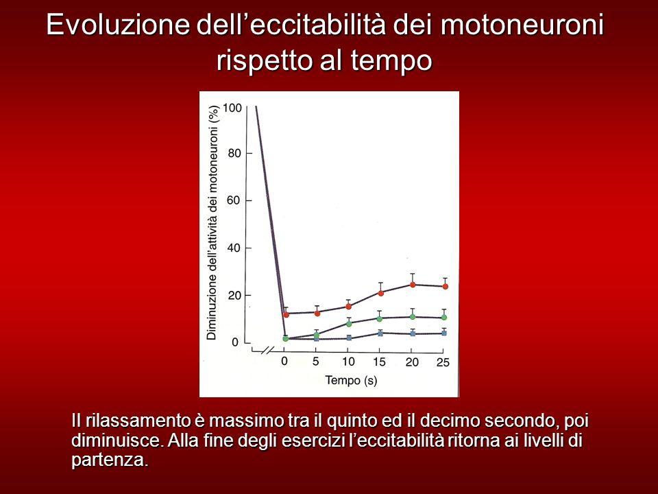 Evoluzione delleccitabilità dei motoneuroni rispetto al tempo Il rilassamento è massimo tra il quinto ed il decimo secondo, poi diminuisce.