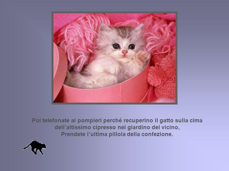 Legate le zampe anteriori e posteriori del gatto con una corda fina ma robustissima; per sicurezza, legate il tutto a un piede del tavolo. Cercate i g