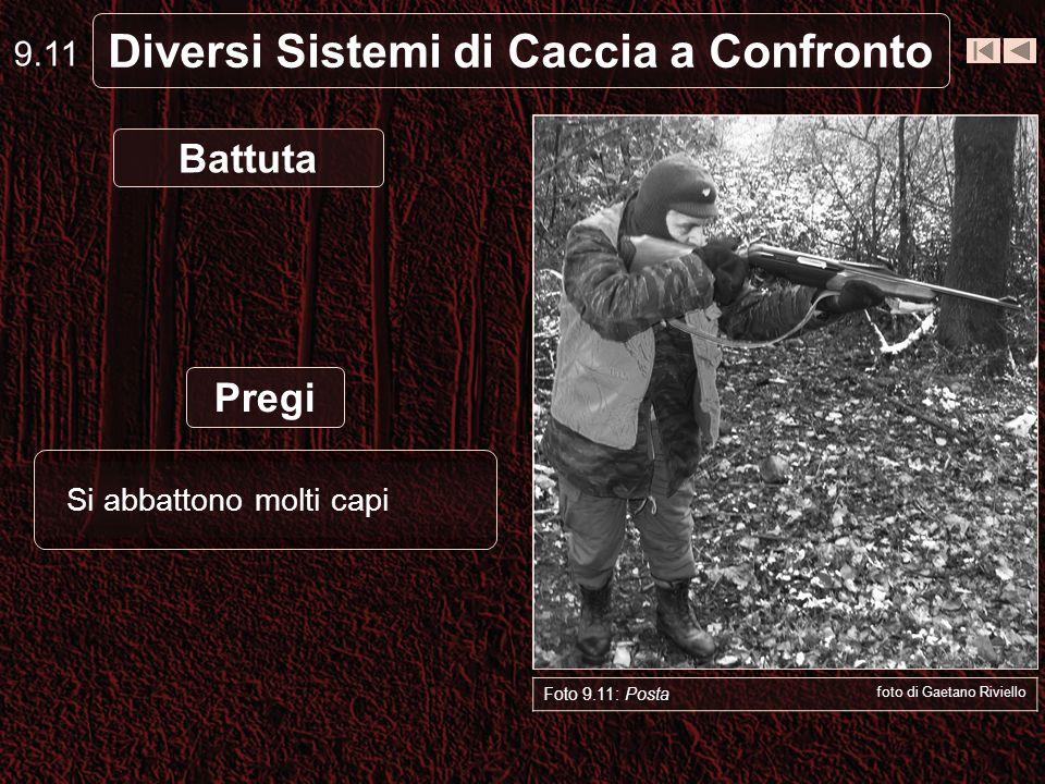 Diversi Sistemi di Caccia a Confronto Foto 9.11: Posta foto di Gaetano Riviello Battuta Si abbattono molti capi 9.11 Pregi