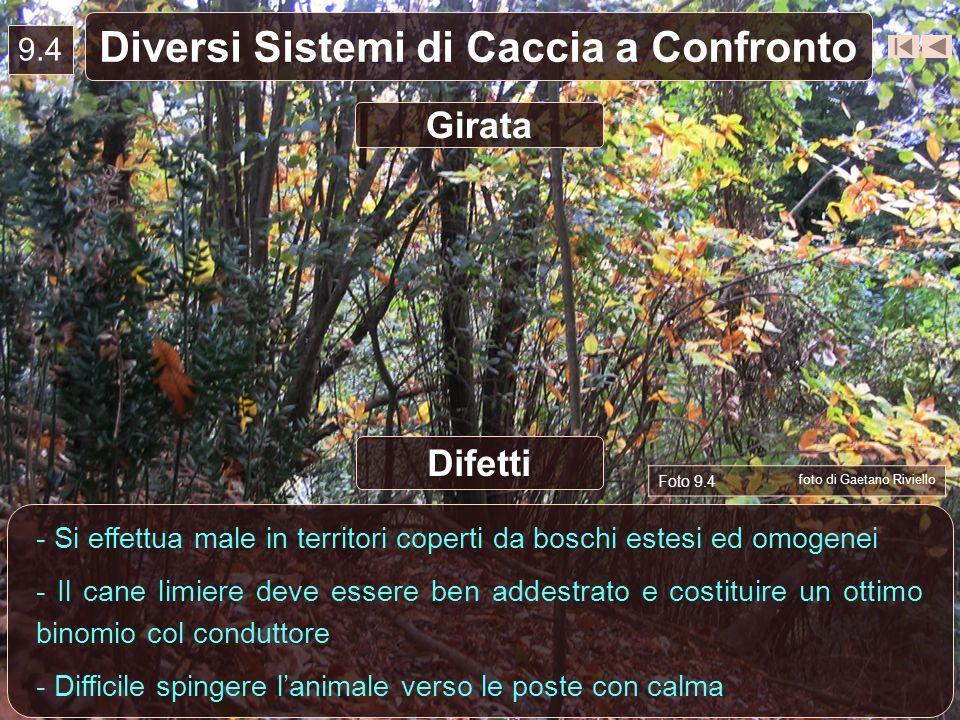 9.4 Diversi Sistemi di Caccia a Confronto - Si effettua male in territori coperti da boschi estesi ed omogenei - Il cane limiere deve essere ben addes