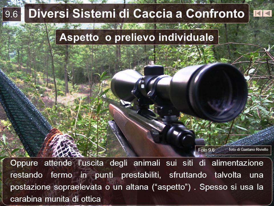 9.6 Diversi Sistemi di Caccia a Confronto Oppure attende luscita degli animali sui siti di alimentazione restando fermo in punti prestabiliti, sfrutta