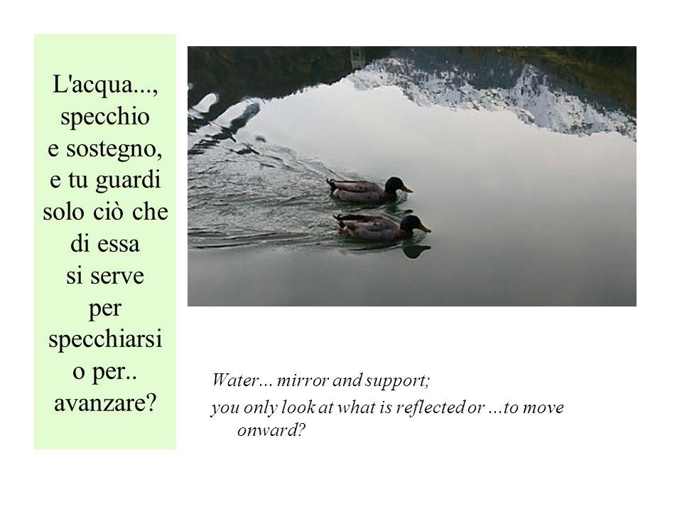 L acqua..., specchio e sostegno, e tu guardi solo ciò che di essa si serve per specchiarsi o per..