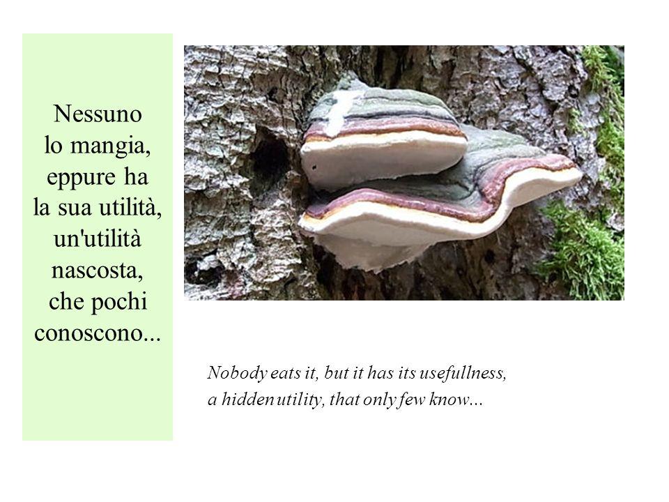 Nessuno lo mangia, eppure ha la sua utilità, un utilità nascosta, che pochi conoscono...