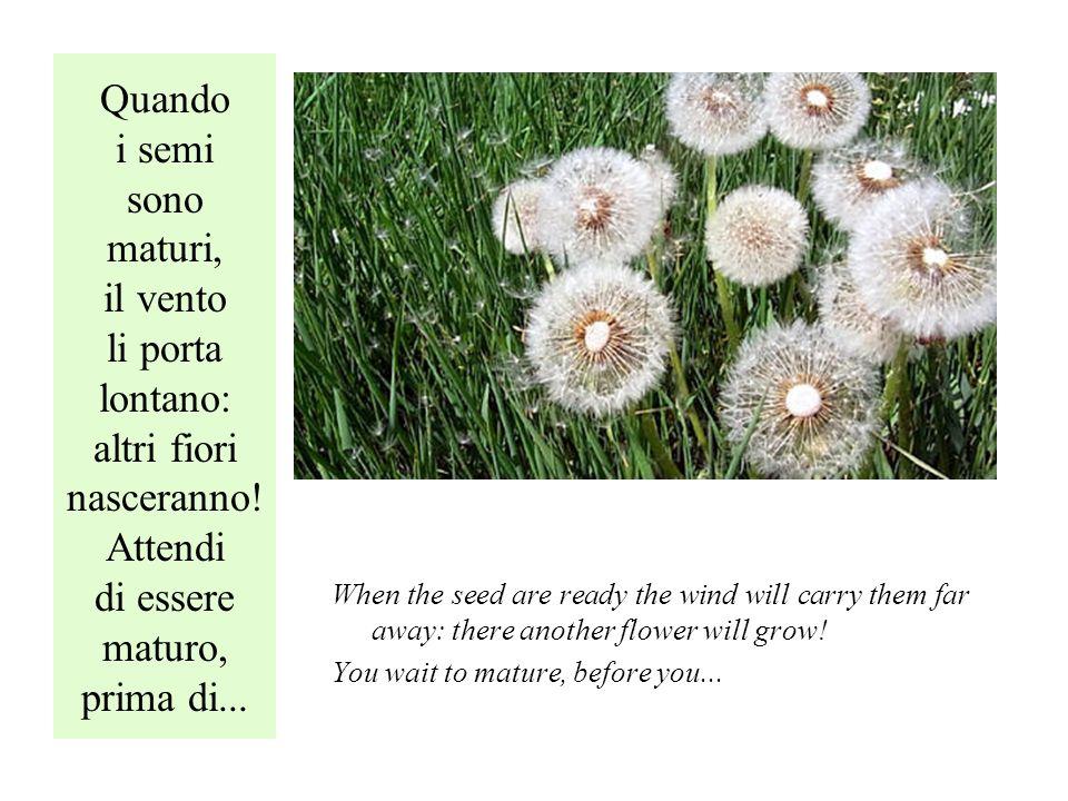 Quando i semi sono maturi, il vento li porta lontano: altri fiori nasceranno.