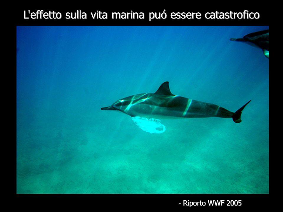 L effetto sulla vita marina puó essere catastrofico - Riporto WWF 2005