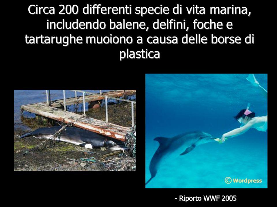 Circa 200 differenti specie di vita marina, includendo balene, delfini, foche e tartarughe muoiono a causa delle borse di plastica - Riporto WWF 2005