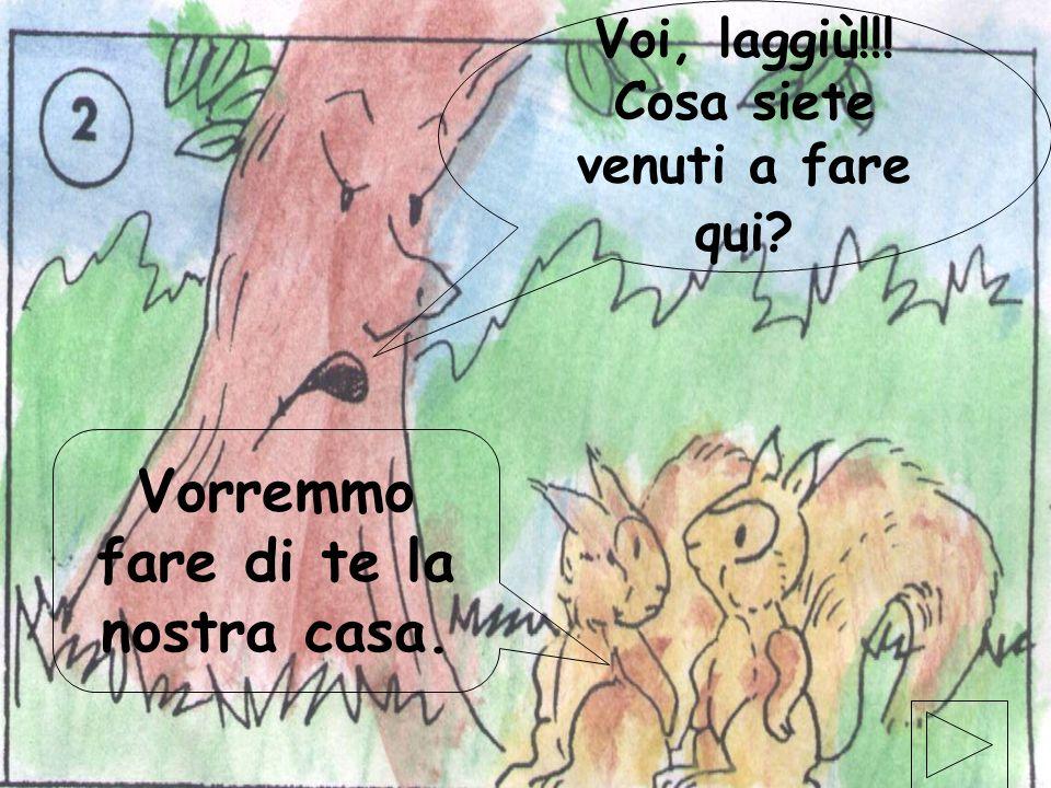 elaborazione elettronica di Gabriele Magistrelli ©settembre 2001 8 Un giorno, due scoiattoli andavano in cerca di una casa, quando videro lalbero dall