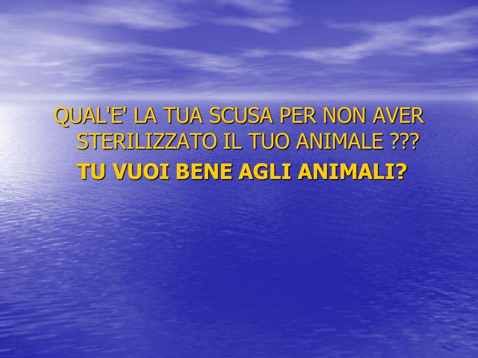 QUAL'E' LA TUA SCUSA PER NON AVER STERILIZZATO IL TUO ANIMALE ??? TU VUOI BENE AGLI ANIMALI? TU VUOI BENE AGLI ANIMALI?