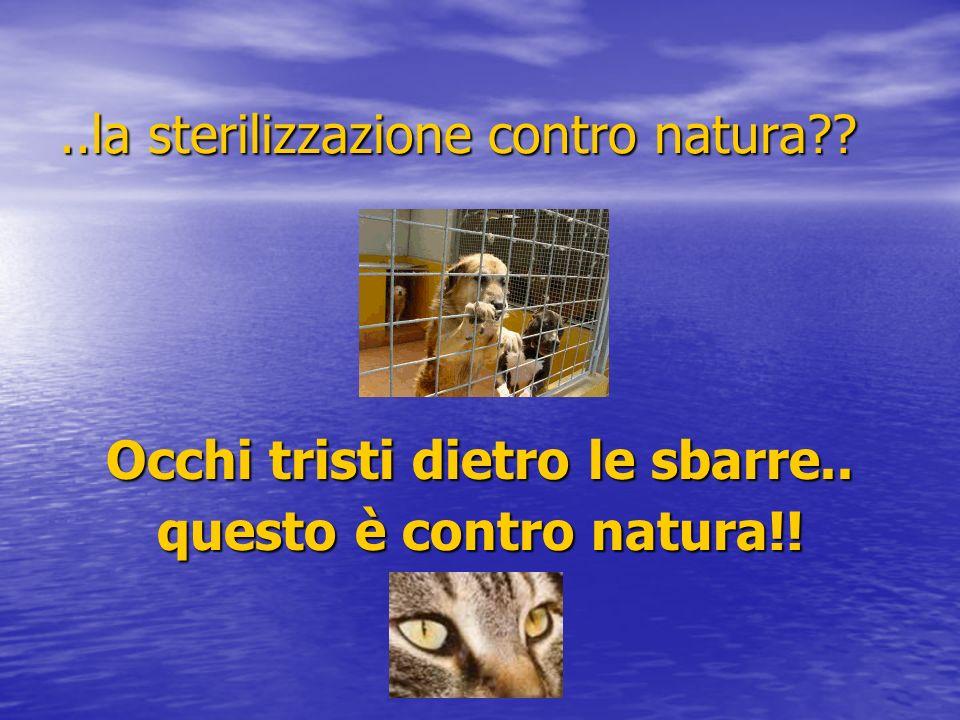 ..la sterilizzazione contro natura?? Occhi tristi dietro le sbarre.. questo è contro natura!!