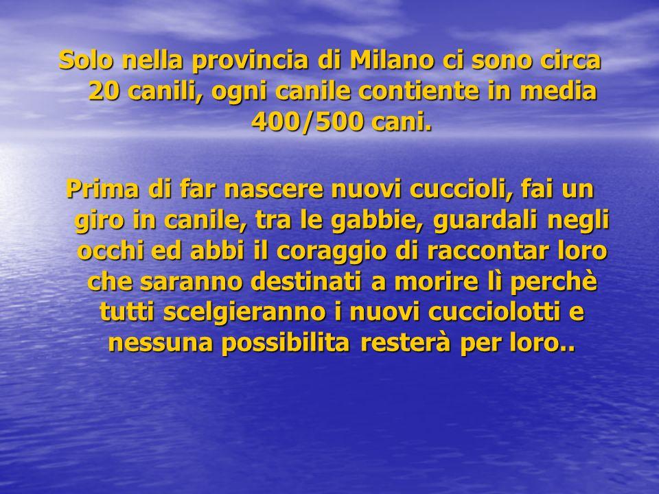 Solo nella provincia di Milano ci sono circa 20 canili, ogni canile contiente in media 400/500 cani. Prima di far nascere nuovi cuccioli, fai un giro