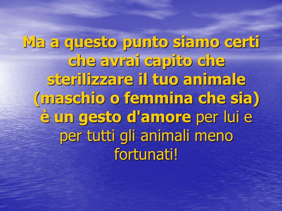 Ma a questo punto siamo certi che avrai capito che sterilizzare il tuo animale (maschio o femmina che sia) è un gesto d amore per lui e per tutti gli animali meno fortunati!